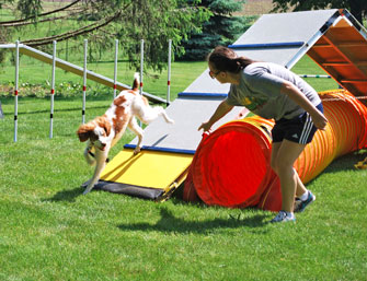 PHoto of dog on agility course