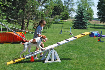PHoto of dog on teeter