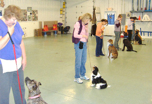 Photo from Intermediate Obedience Class