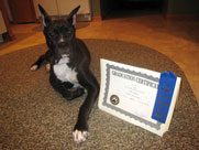 Photo of Canine Graduate with Certificate