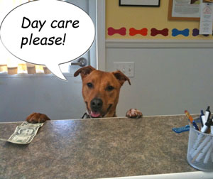 Photo of Murphy at Day Care counter