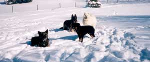 photo of dogs playing in snow