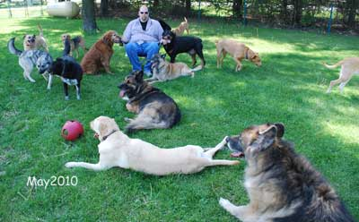 Photo of Steve with 14 daycare dogs
